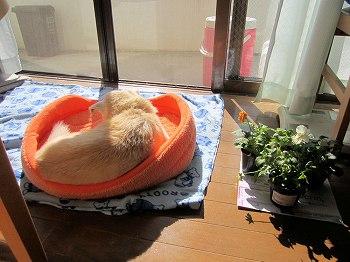 愛犬ペット
