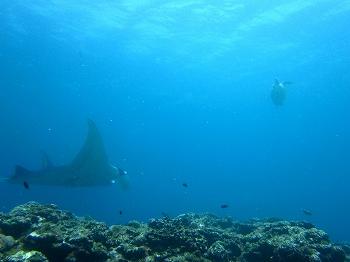 マンタ&ウミガメ