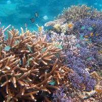 サンゴ群生3