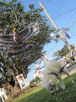 三番アコウの木1