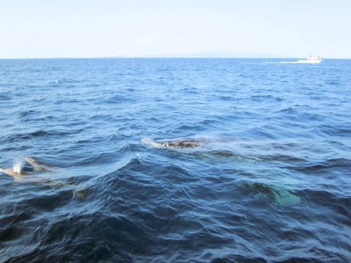 イルカ&クジラ