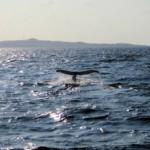 クジラのテール