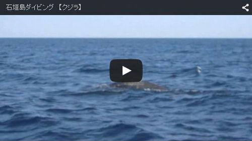 YouTubeクジラ