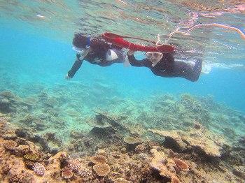 移植サンゴ