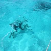 潜水作業中