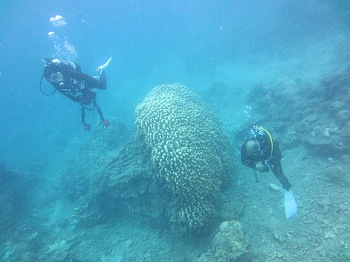 ブロッコリーサンゴ