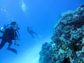 波照間島遠征ダイブ3