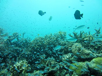 浜島キンメの根