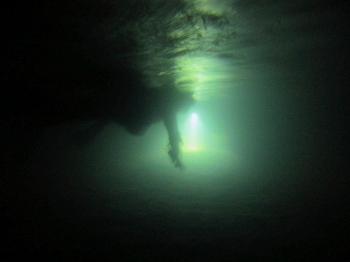 ナイト水中写真