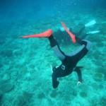 移設サンゴ1