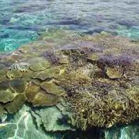 サンゴ11