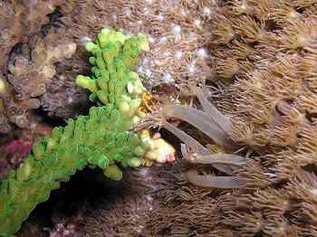 サンゴ13