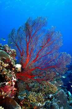 サンゴ14
