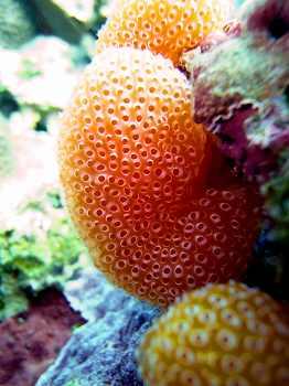 サンゴ17