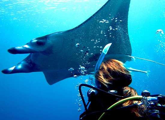 Tida Diving Service