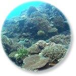 サンゴ礁バナー