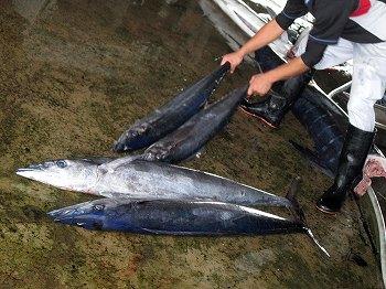 八重山漁協