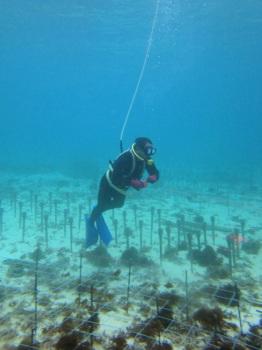 サンゴ移植1