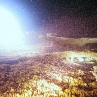 サンゴの産卵1