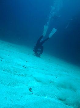 ダイビング5