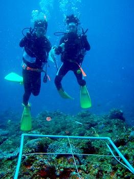 サンゴ礁モニタリング