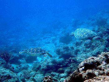 ウミガメ2