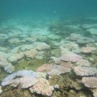 サンゴ白化