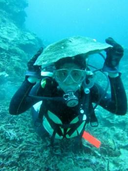 ヘルメットサンゴ