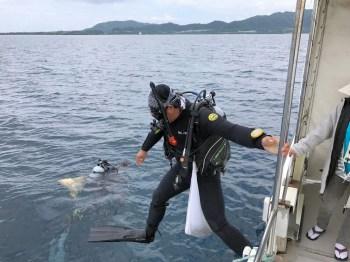 サンゴ調査