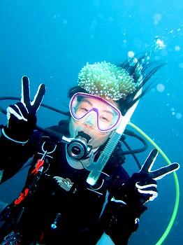 パラオクサビライシサンゴ