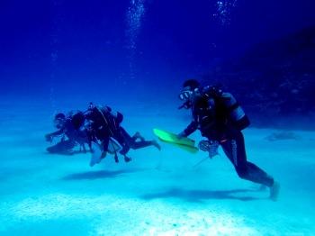 波照間島遠征ダイビング