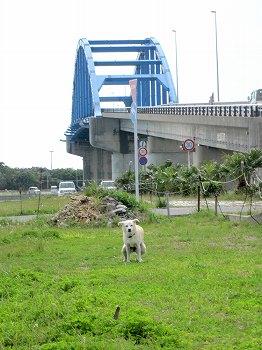 石垣島サザンゲートブリッジ2