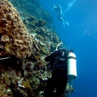 調査ダイビング