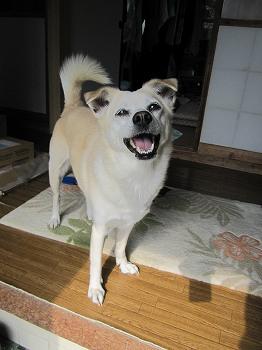 ペットの写真2