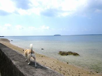 石垣島フサキ