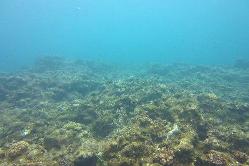 サンゴ白化1