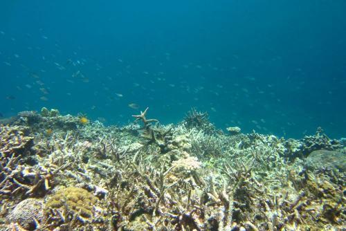 サンゴ白化2