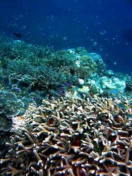サンゴ写真