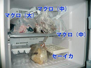 冷凍マグロ
