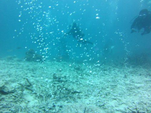 竹富海底温泉2