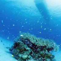 水中写真3