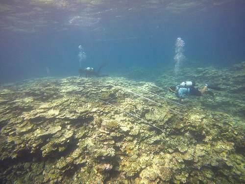 サンゴ礁調査