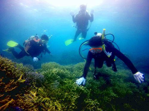 造礁サンゴ礁