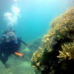石垣島周りはニゴニゴでした