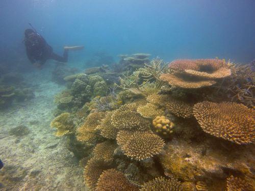 サンゴ礁1