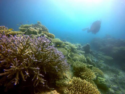サンゴ礁2