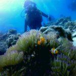 極上サンゴの名蔵湾で3ダイビング!