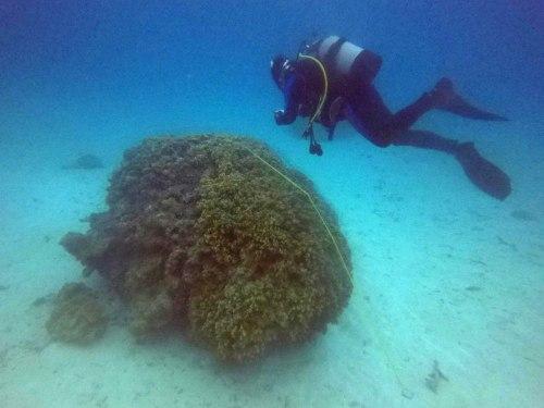 調査ダイビング1