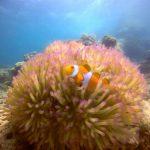 """<span class=""""title"""">サンゴとコーラルフィッシュに囲まれ色鮮やかなダイビング</span>"""